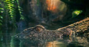 Coccodrillo marino