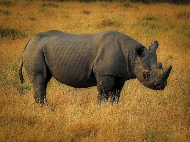 Animali in via d'estinzione