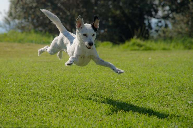Migliori parchi per il cane
