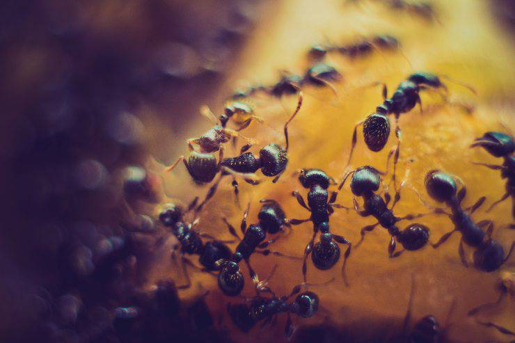 La gente odia gli insetti tratti umani negli insetti