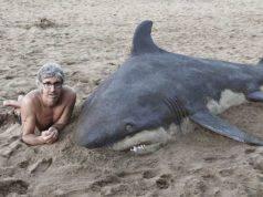sculture sabbia Bastorrika animali