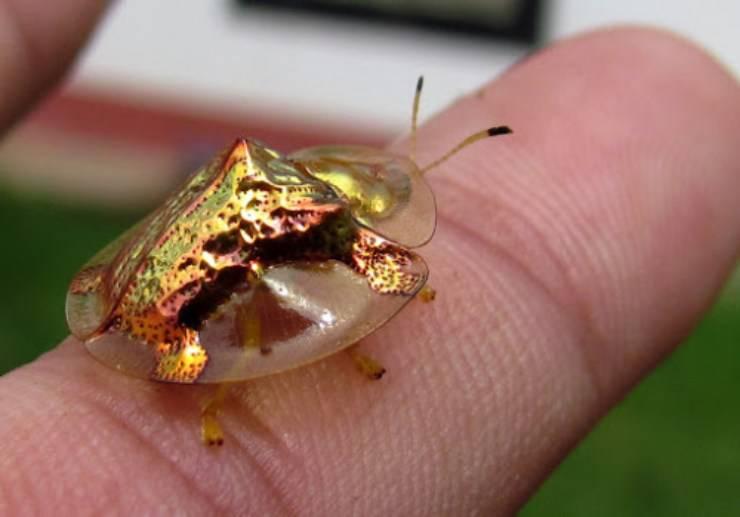 scarabeo tartaruga doro tumblr