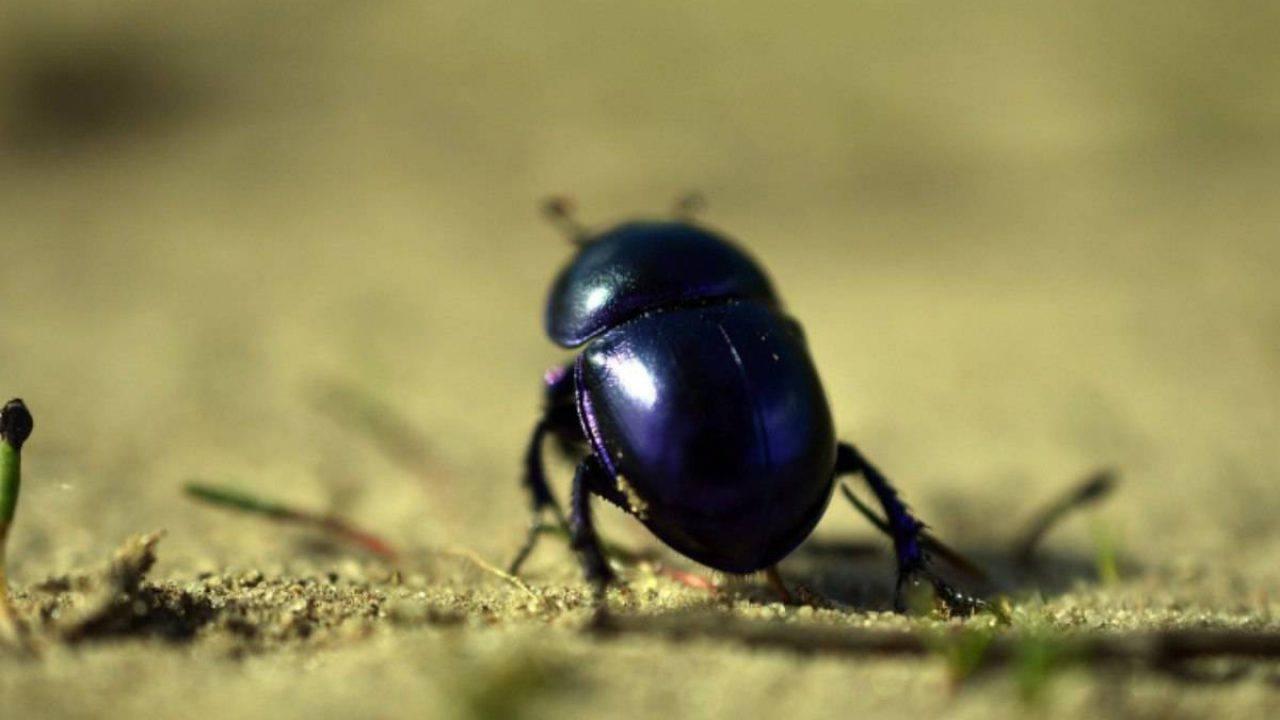 Piccoli Scarafaggi In Cucina malattie trasmissibili dagli scarafaggi: quali sono e come