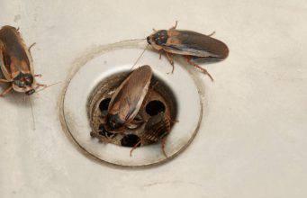 scarafaggi dallo scarico