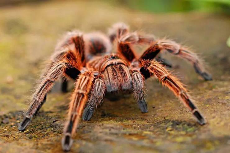 ragno mangia dieta