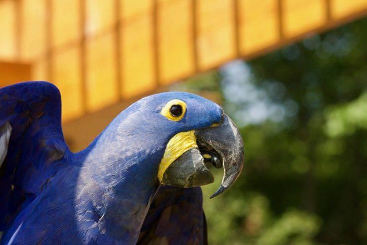 segnali che un uccello è felice