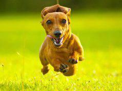 segnali buona salute cane