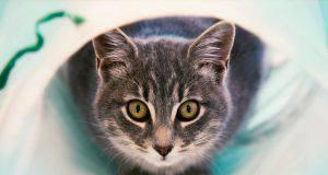 segnali salute gatto