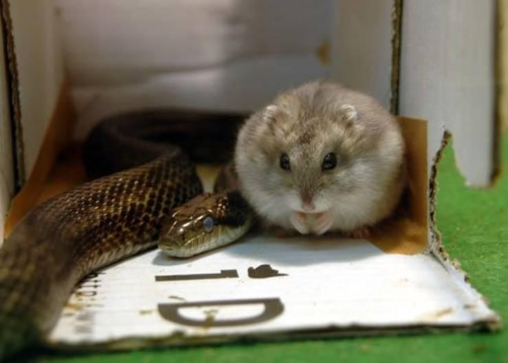serpente criceto amicizie animali