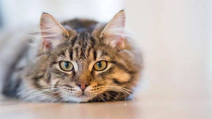 Socializzare un gatto timido