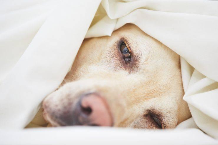 sintomi infezione cane