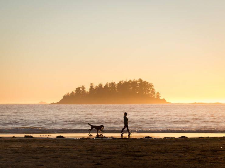 Cani che amano la spiaggia