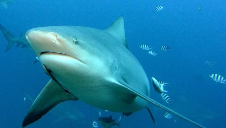 Uragani squalo pesci