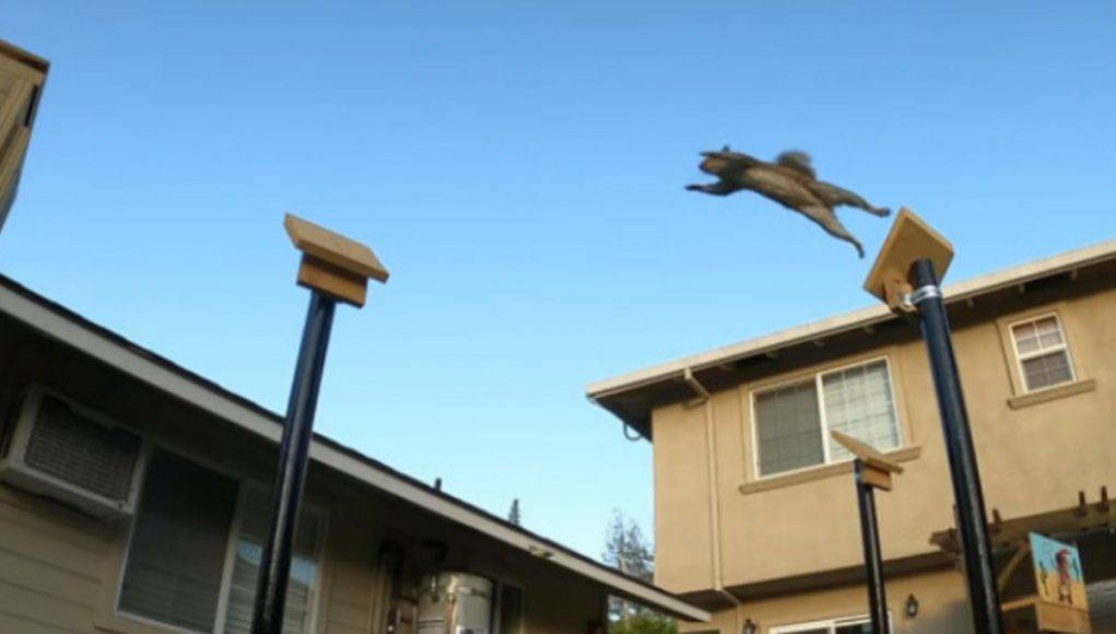 Ingegnere percorso ostacoli scoiattoli