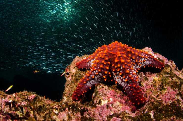 Stelle marine (Foto AdobeStock)