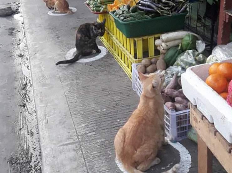 gatti distanziamento sociale coronavirus