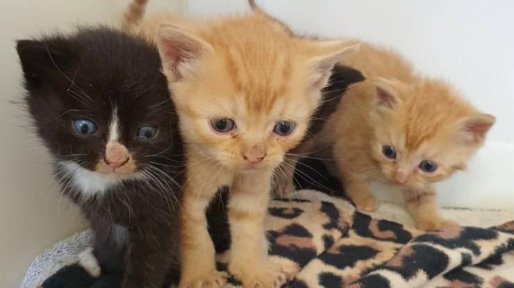 gatti intrappolati