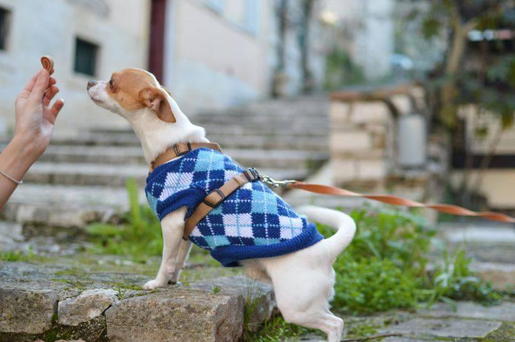 Addestrare un cagnolino