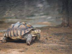 La nostra prima tartaruga domestica: come prepararci per il suo arrivo