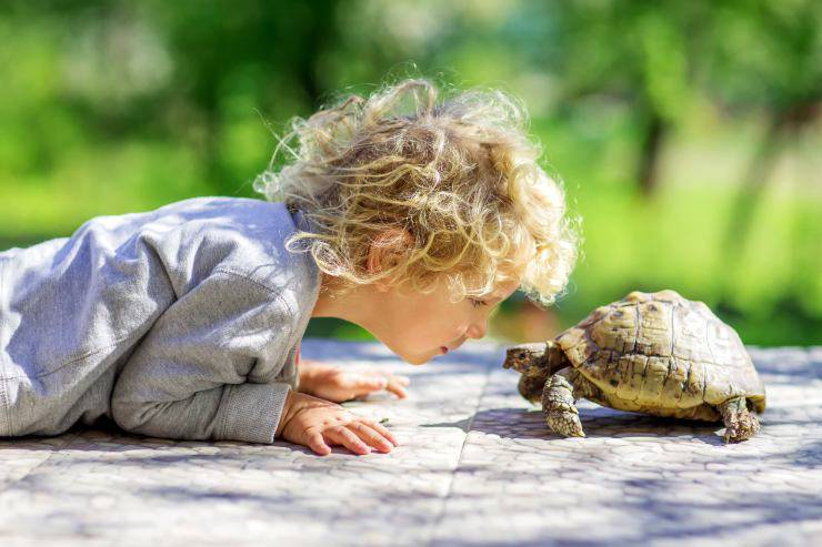 La tartaruga può mangiare pane?