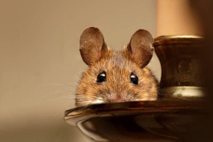 Il topolino riconosce il padrone ed il suo nome?
