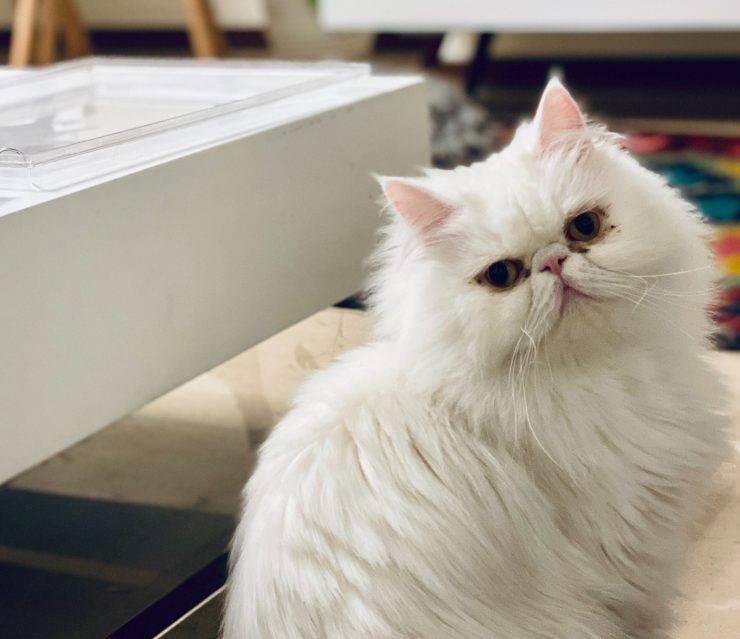 Solitudine del gatto