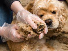 tumore alla zampa del cane