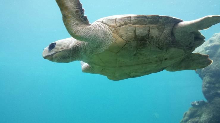 Vita media della tartaruga