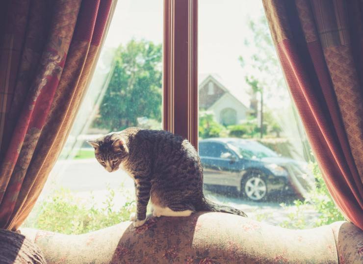 Come comunicare con un gatto ansioso e come alleviare il suo stress