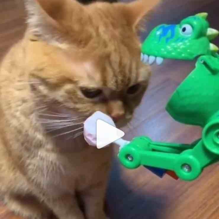 giocattolo gatto