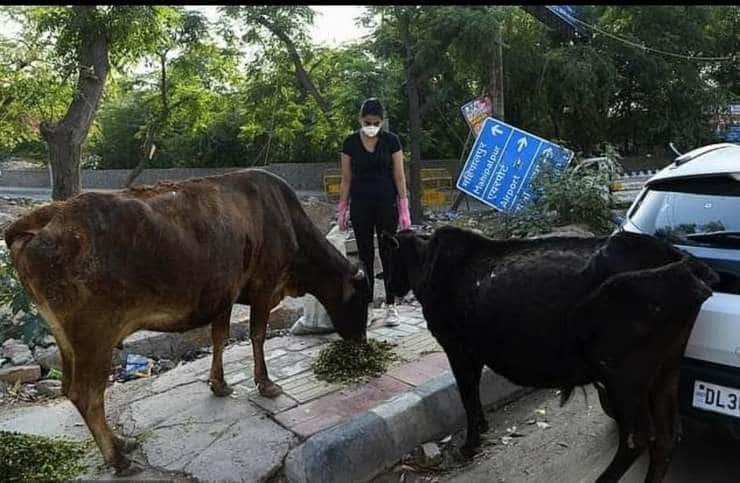 volontari sfamano cani randagi
