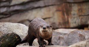 Giornata mondiale della Lontra
