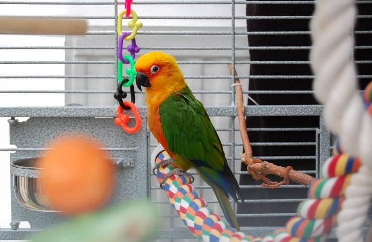 zampe del pappagallo