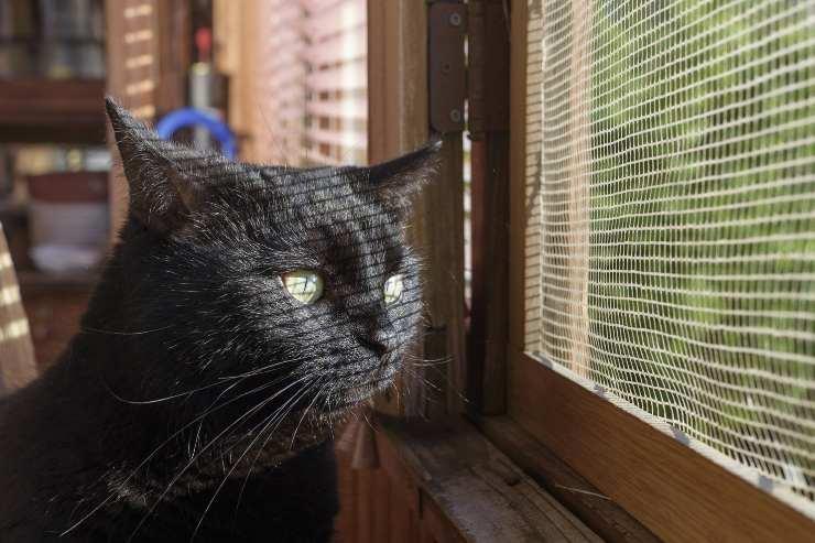 zanzariera a prova di gatto