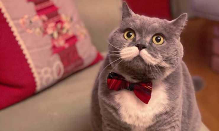 Il gatto con il fiocco (Foto Instagram)