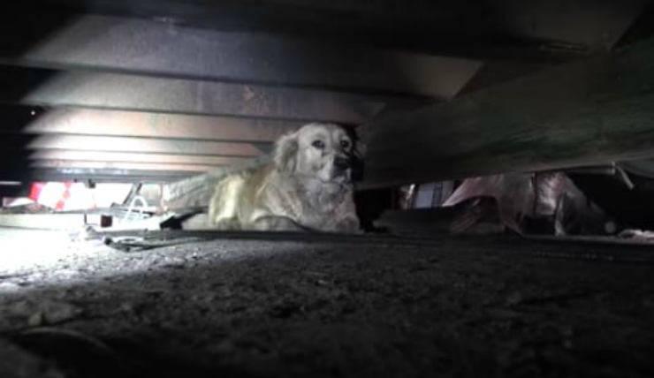 Il cane nascosto (Foto video)
