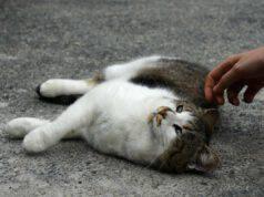 Come avvicinare un gatto sconosciuto e presentarsi in tutta sicurezza