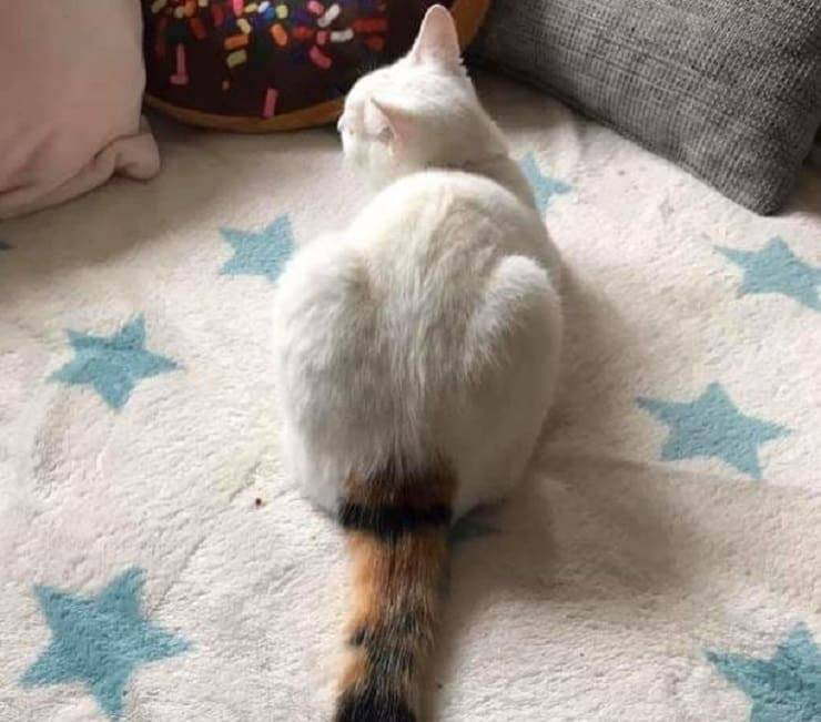 imperfezioni feline