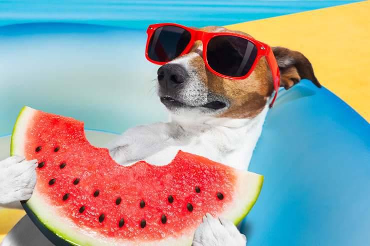 alimenti che rinfrescano il cane in estate