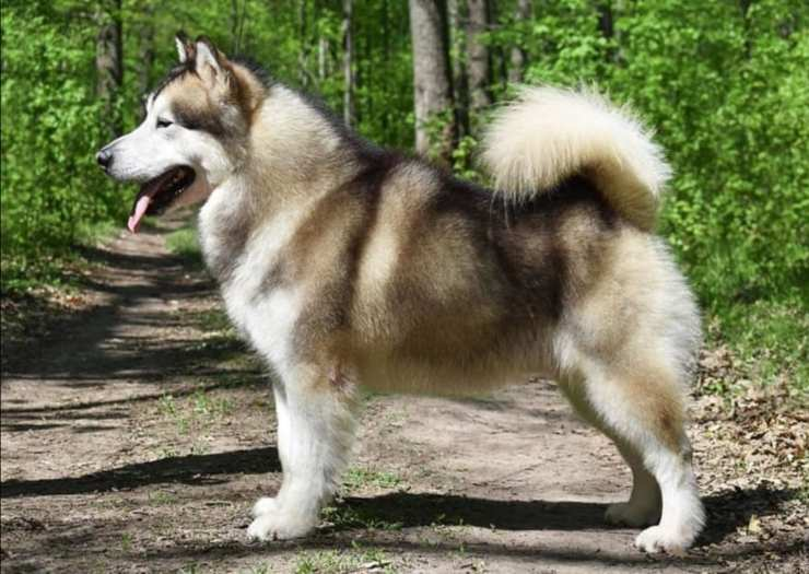 Razze di cani simili