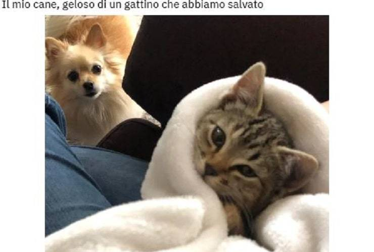 cane gatto gelosia