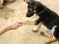 Come avvicinare un cane sconosciuto e presentarsi in tutta sicurezza