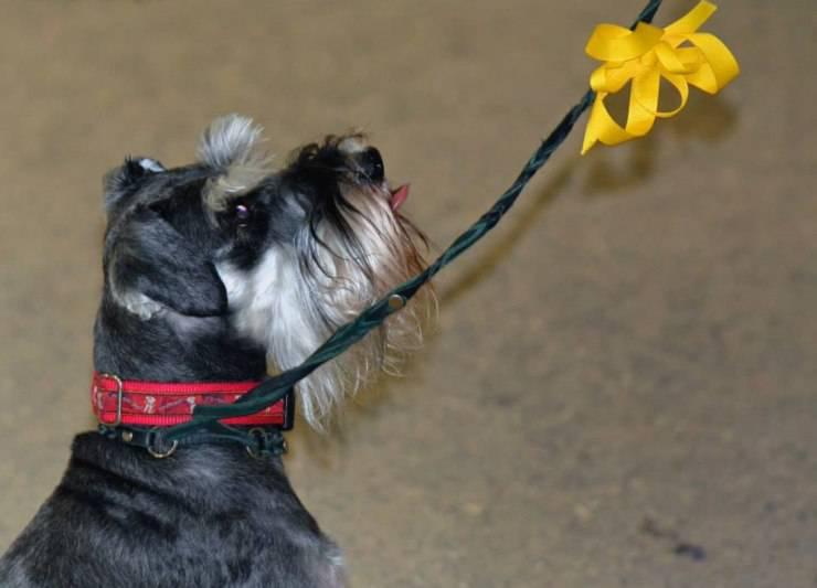 Cosa significa il fiocco giallo sul collare del cane? I simboli da riconoscere