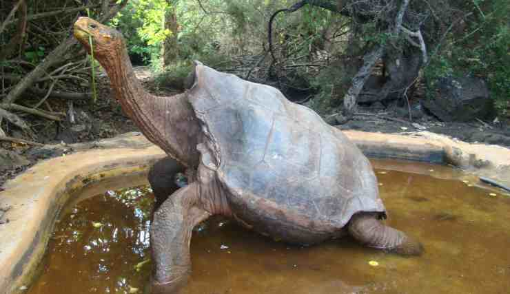 La tartaruga Diego (Foto Facebook)