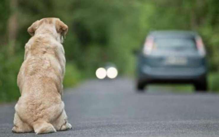 Cane abbandonato in autostrada Facebook