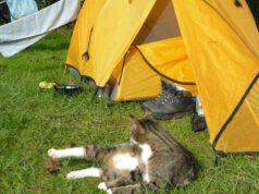 In campeggio con il gatto: vivere in tenda con il micio in vacanza