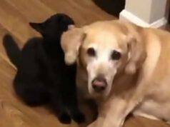 Il cane e il gatto amici (Foto video)