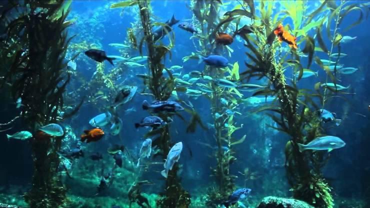 Guardare i pesci in un acquario: una vera e propria terapia per rilassarsi