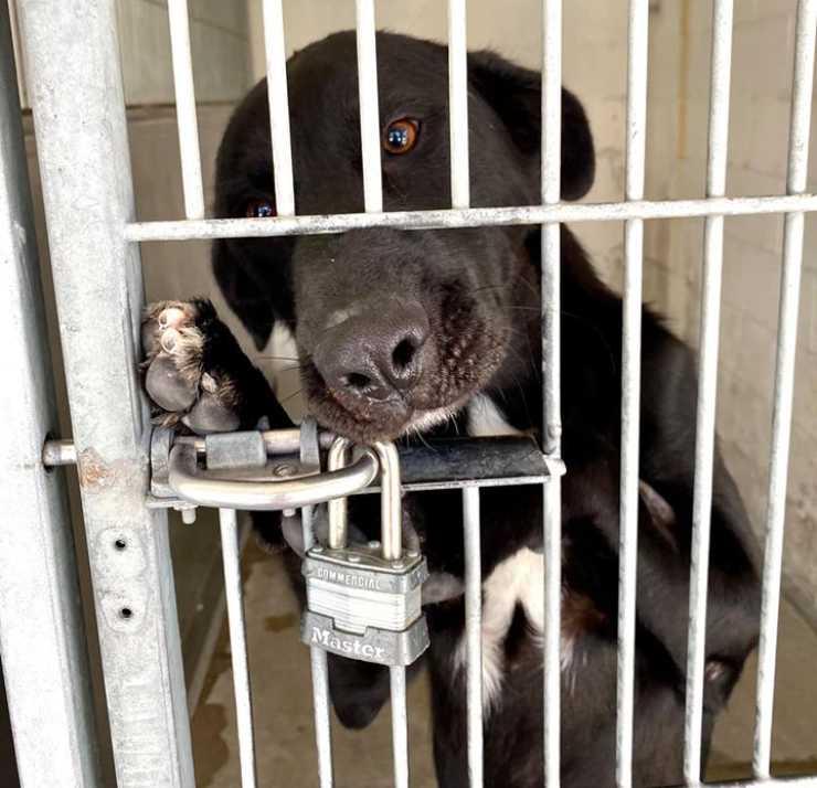 cane capisce riportato rifugio