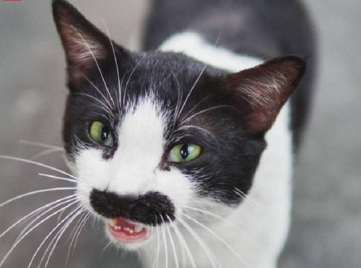 gatto con baffi umani